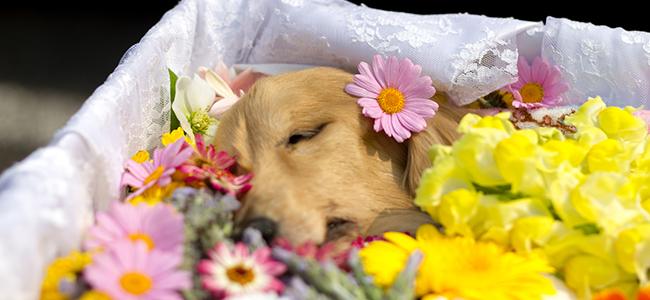 ペット葬2